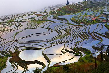 Rice terraces at sunrise, near Duoyishu village, Yunnan Province, China.