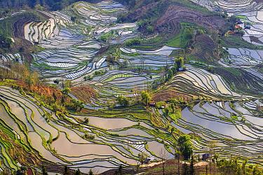 Rice terraces at Laohuzui, Yunnan, China.