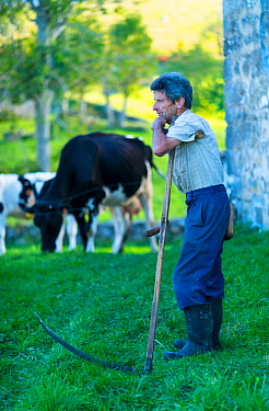 Man leaning on scythe, Miera Valley, Valles Pasiegos, Cantabria, Spain. October, 2017.