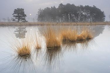 Wetland at sunrise, Klein Schietveld, Brasschaat, Belgium