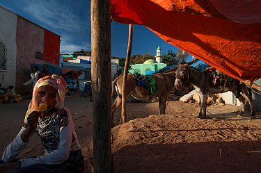 Child eating ice lolly with donkeys standing behind, City of Harar. Ethiopia. February 2008.