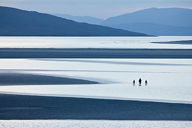Luskentyre beach with three people wading in water, Isle of Harris, Outer Hebrides, Scotland, UK. June 2012.