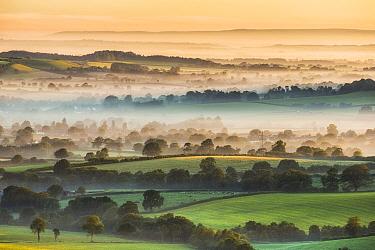 Marshwood Vale in morning mist, from Pilsdon Pen, Dorset, England, UK. July 2012.