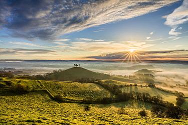 Colmer's Hill, Bridport, Dorset, England, UK. April 2016.