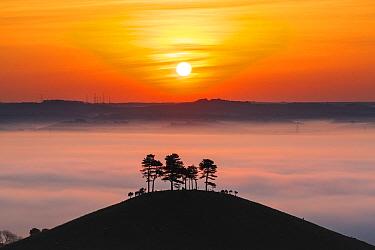 Colmer's Hill at sunrise, Bridport, Dorset, England, UK. May 2014.