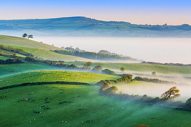 Pilsdon Pen and Marshwood Vale in morning mist, Quarr Hill, Dorset, England, UK. May 2014.