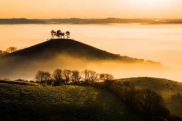 Colmer's Hill in mist, Bridport, Dorset, England, UK. May 2014.