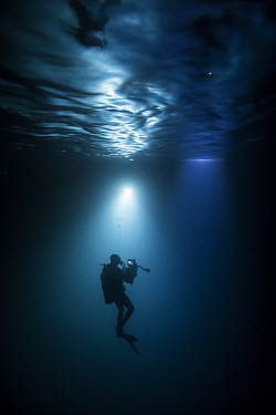 Scuba diver filming Whale shark (Rhincodon typus) Tadjourah gulf, Djibouti.