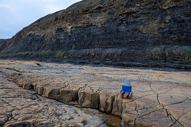 A PDC (polycrystalline diamond compact) type oil field drill bit on one othe Kimmeridge ledges. Kimmeridge Bay, Dorset, UK, March. The ledges are hard Jurassic age, carbonate rich horizons of Limetone...