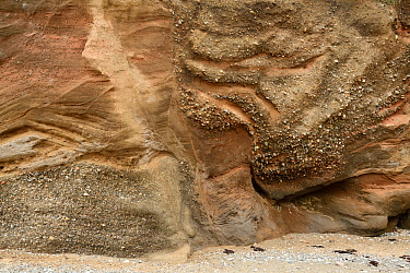 Glacial Sand and Gravel deposited within a kettle hole, Baumaris, Anglesey, Wales, UK, June. Sediment is deposited around a block of ice left near the front of a melting or retreating glacier. When t...