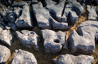 Clints (blocks) and Grykes (gaps) of limestone pavement. This is Carboniferous age limestone, part of a large area of Karst above Austwick, Yorkshire, UK. Slightly acidic rainfall, erodes and enlarges...