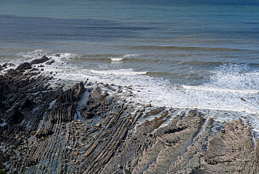 Folded Carboniferous age sandstone and shale (Culm Measures) in plan view, deformed by compression during the Variscan or Hercynian orogeny, a geologic mountain-building event caused by Late Paleozoic...