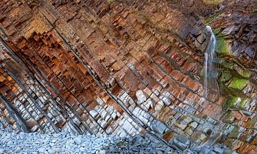 Tilted beds of sandstone and thin shales of the Carboniferous, Culm Measures (Bude Formation) Sandy Mouth near Bude, Cornwall, UK, May. The bed represent cycles of deposition associated with climate c...