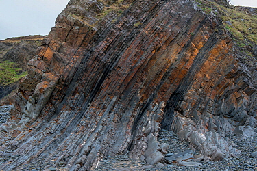 Steeply dipping beds of Carboniferous age sandstone and shales (Culm measures) on the flank of a large fold. This deformation was formed by compression during the Variscan or Hercynian orogeny, a geol...