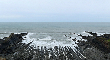 An eroded synclinal fold exposed Carboniferous age sandstones and shales. Hartland Quay, Devon, UK, May