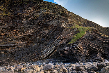 A thrust fault in Carboniferous age Sandstones and shales (Culm Measures) at Crackington Haven, near Bude, Cornwall, March. The rocks comprise the Crackington Formation of thinly bedded turbidite sand...