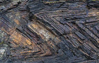 Chevron recumbent foldeding in Carboniferous age sandstone and shale (Culm Measures), deformed by compression during the Variscan or Hercynian orogeny, a geologic mountain-building event caused by Lat...