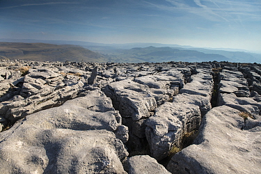 A Limestone Pavement with well developed Clints (blocks) and Grykes (gaps). This is Carboniferous age limestone, part of a large area of Karst above Austwick, Yorkshire, UK. Slightly acidic rainfall,...