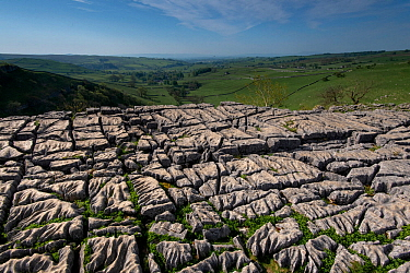 Karst landscape in Carboniferous (Dinantian) Limestone, with Clints and Grykes developed on a limestone pavement. Malham, Yorkshire, UK, May