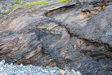 Conjugate kink bands in Carboniferous turbidite shales, Bude, Cornwall, UK, May