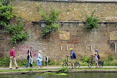 Leisure cyclists giving way to people walking on the Regent's Canal tow-path, Kings Cross, London Borough of Camden, England, UK, August 2013.