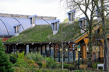 Green roof on The Centre for Understanding the Environment (CUE) an eco building with cowls on the roof which incorporate a passive ventilation system. The Horniman Museum, London, UK