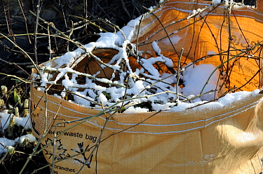 Green waste bag with vegetation and snow on top, London Borough of Islington, UK
