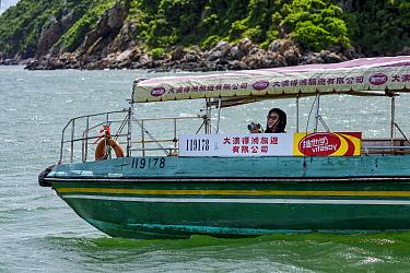 Woman smiling while watching Indo-Pacific humpback dolphins (Sousa chinensis) Lantau Island, Hong Kong, China. June, 2016.