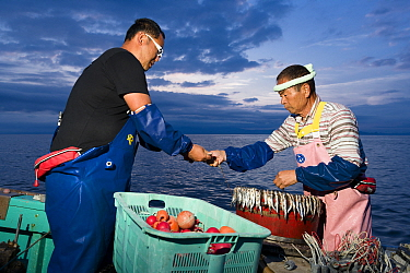Fishermen, father and son, preparing bait and lines in the pre-dawn hours for deep sea fishing. Suruga Bay, Shizuoka Prefecture, Honshu, Japan. April 2018.
