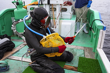 Ama diver on boat. preparing to work in the ocean. Metal tool to pry shells from rocks, net to collect shells and hoses to supply air and facilitate communication. Futo Harbour, Izu Peninsula, Shizuok...