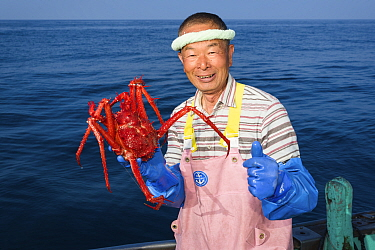 Fisherman holding deep-sea King crab (Lithodes turritus), caught at a depth of 1000m. Suruga Bay, Shizuoka Prefecture, Honshu, Japan. April 2018.