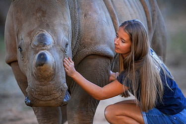 White rhinoceros (Ceratotherium simum) orphaned calf is comforted by its foster mother - a British veterinary nurse, at the Rhino Revolution wildlife rehabilitation centre near Hoedspruit, South Afric...
