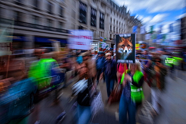Protest against the British Government's plans to vote on repealing the ban on fox hunting and plans to expand the controversial badger cull. London, England, UK, August 2017. Winner of the Portfolio...