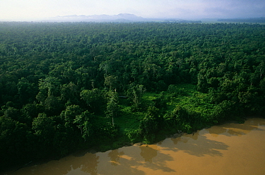 Aerial view of rainforest along the Kinabatangan River, with clearing used by elephants visible. Kinabatangan Wildlife Sanctuary, Sabah, Malaysia, Borneo
