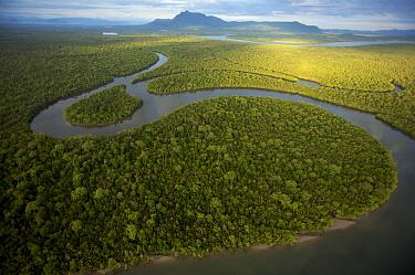 Aerial view of rivers and mangrove forest. Sarawak Mangrove Reserve, Sarawak, Borneo, Malaysia. June 2006