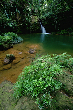 A waterfall in the lowland rainforest of Borneo, with pool surrounded by ferns and other plants. Lambir Hills National Park, Sarawak, Malaysia.