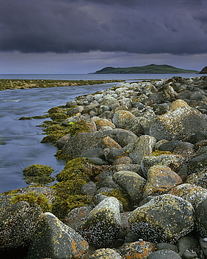 Barnacles and boulders on the banks of the outspill of The Little Gruinard river. Gruinard Bay, North west coast, Scotland.