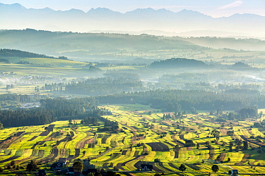 Field patterns wiht the Tatra mountains in the distance, Poland. September 2014