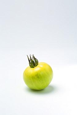 Green tomato on white background.