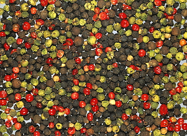 Mixed Peppercorns of various colours, red, black, and green (Piper).