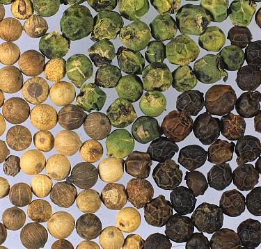 White, green, and black Peppercorns.