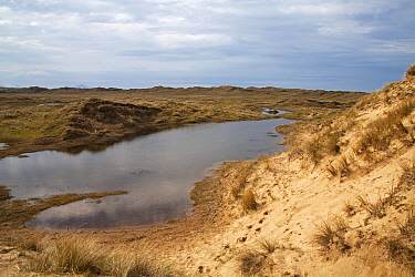 Sand dunes and freshwater pool, Aberffraw Dunes AONB, Aberffraw, Isle of Anglesey, Wales, UK, April.