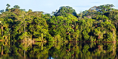 Rainforest at Sandoval Lake, Tambopata National Reserve, Peru.