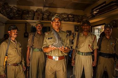 Forest guards holding seized Indian rhinoceros (Rhinoceros unicornis) horn, Kaziranga National Park, Assam, India
