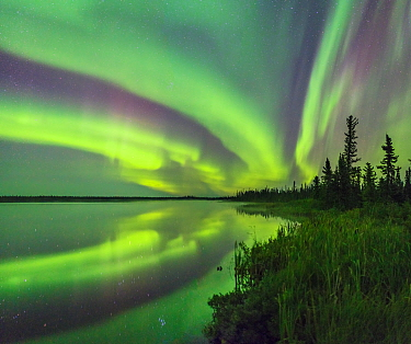 Aurora Borealis reflected in Polar Lake, wetland and conifers silhouetted along shore. Near Great Slave Lake, Northwest Territories, Canada. September 2018.