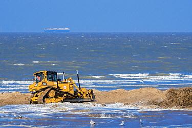 Bulldozer used for sand replenishment / beach nourishment to make wider beaches to reduce storm damage to coastal structures along the Belgian coast, Belgium, 2018