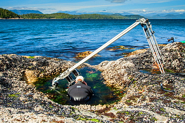 Using a specialist motion control rig to film underwater timelapse in a rockpool. On production for BBC Blue Planet II, Vancouver island, British Columbia, Canada, July.