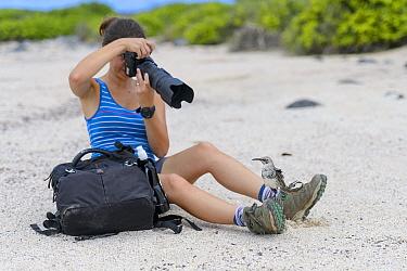 Tourist photographs an Espagnola mockingbird (Mimus macdonaldi) that has landed on her boot. Espagnola Island, Galapagos National Park, Galapagos Islands. Model released.
