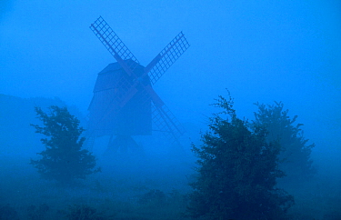 Windmill and trees silhouetted in fog, . Oland, Gotland, Sweden. June.
