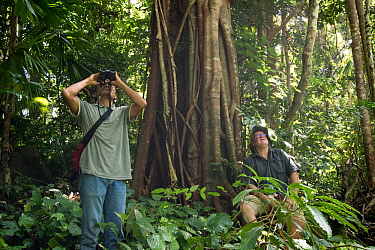 Scientists observing a termite mound after a large flying insect was found nearby in a healthy patch of lowland forest, North Moluccas, Indonesia. January 2019